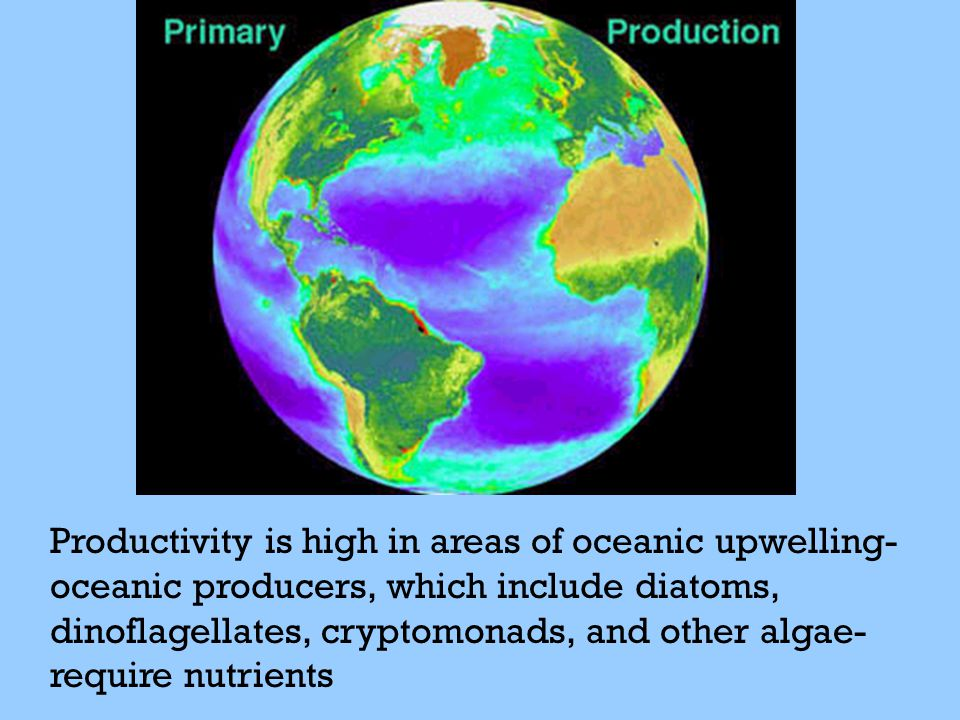 Productivity is high in areas of oceanic upwelling-oceanic producers, which include diatoms, dinoflagellates, cryptomonads, and other algae-require nutrients