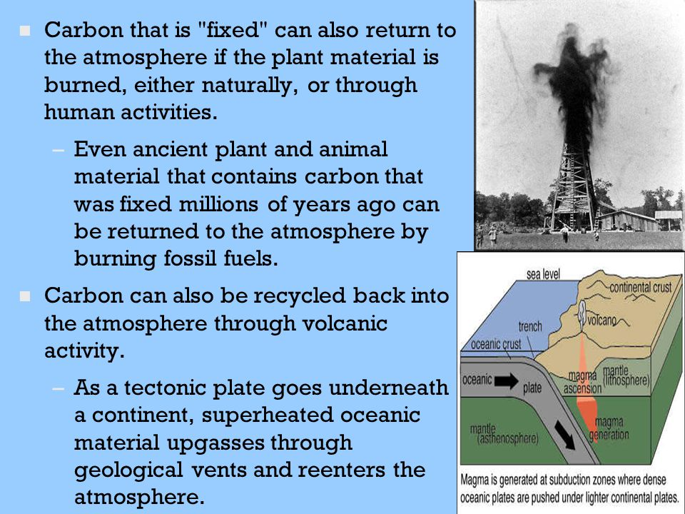 Carbon that is fixed can also return to the atmosphere if the plant material is burned, either naturally, or through human activities.