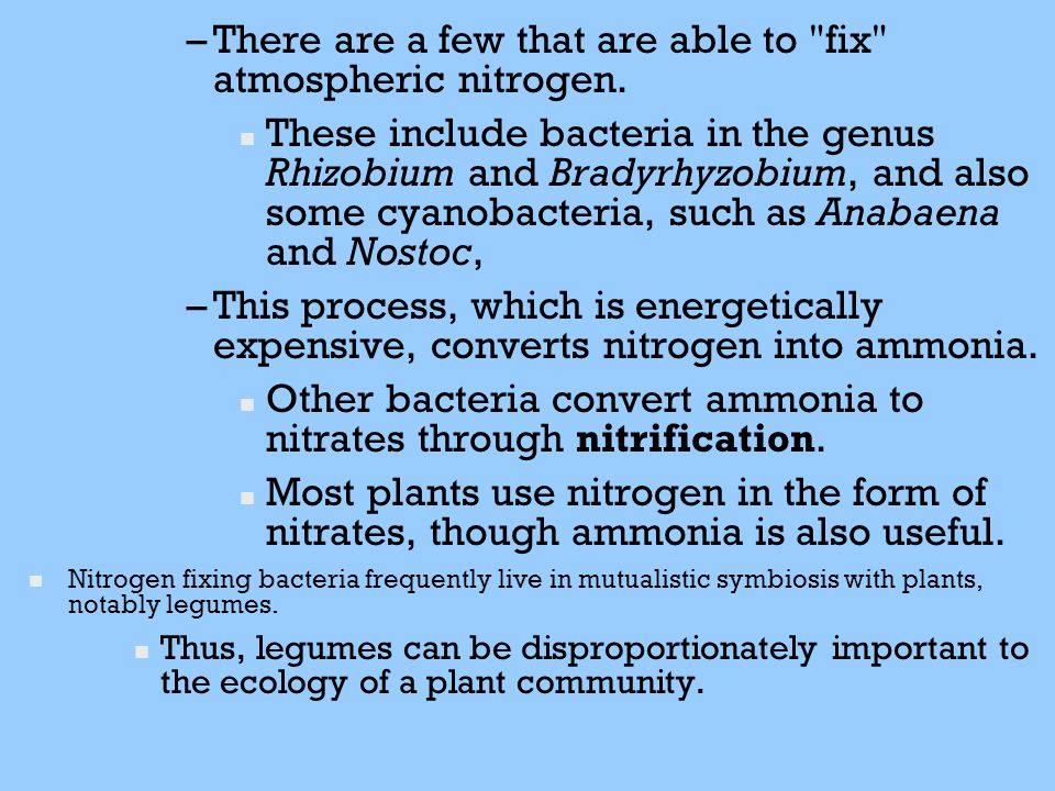 There are a few that are able to fix atmospheric nitrogen.