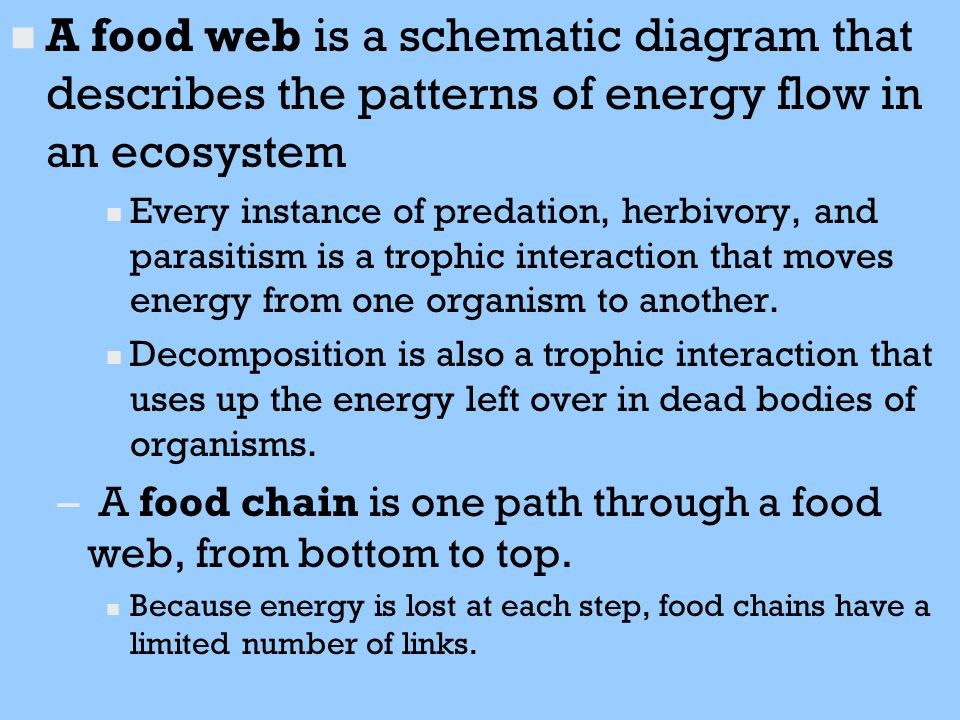A food web is a schematic diagram that describes the patterns of energy flow in an ecosystem