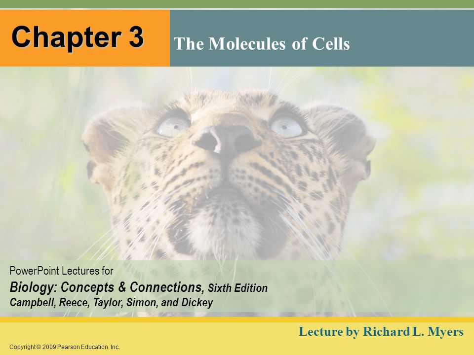 Chapter 3 The Molecules of Cells Lecture by Richard L. Myers
