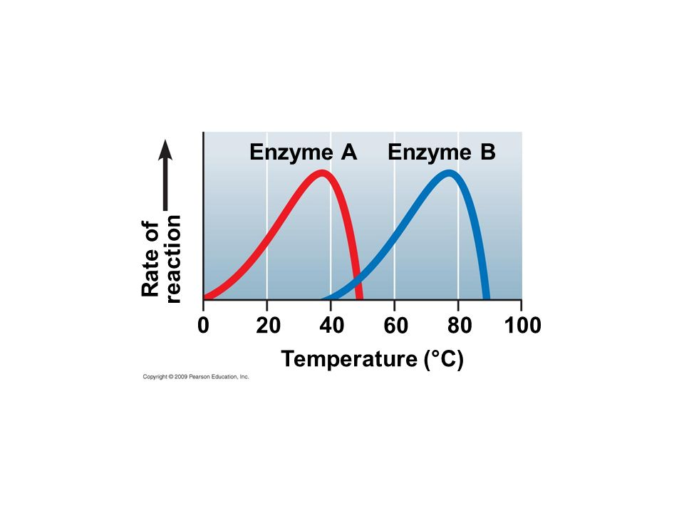 Enzyme A Enzyme B Rate of reaction Temperature (°C)