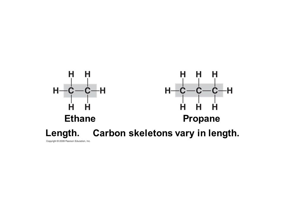Carbon skeletons vary in length.