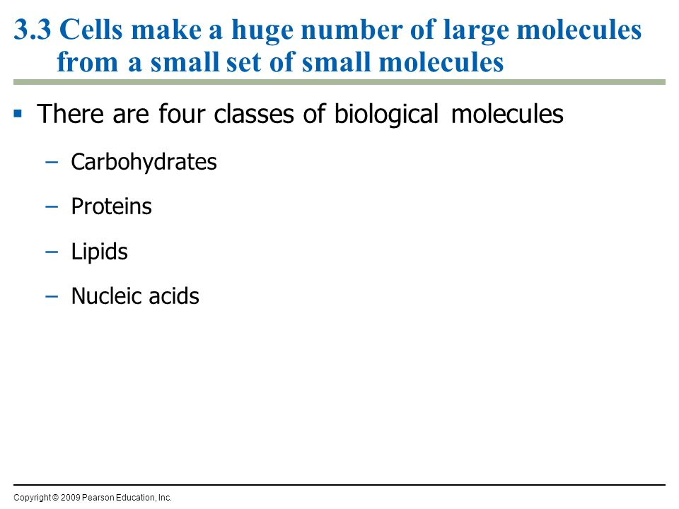 3.3 Cells make a huge number of large molecules from a small set of small molecules