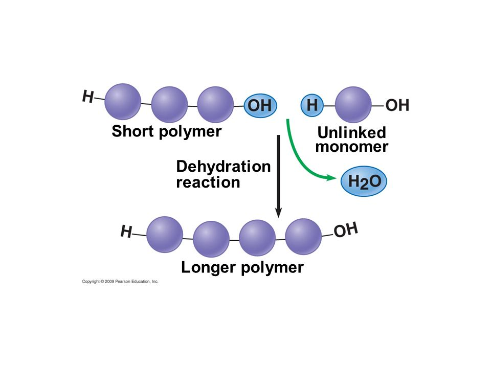 Short polymer Unlinked monomer Dehydration reaction Longer polymer