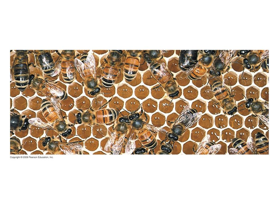 Figure 3.4A Bees with honey, a mixture of two monosaccharides.