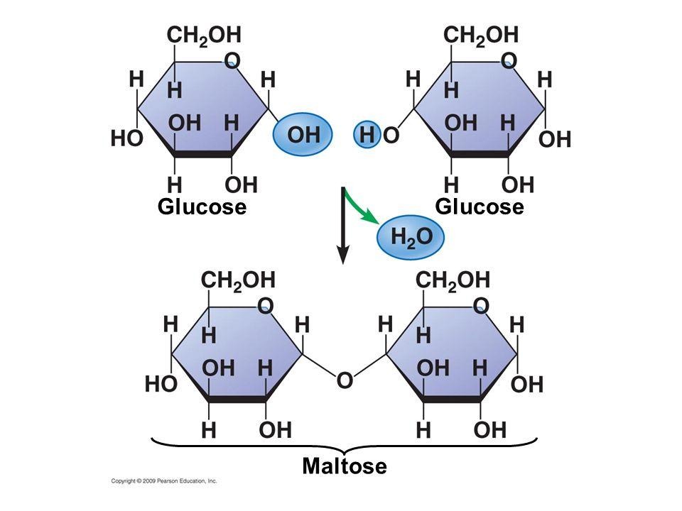 Glucose Glucose Maltose