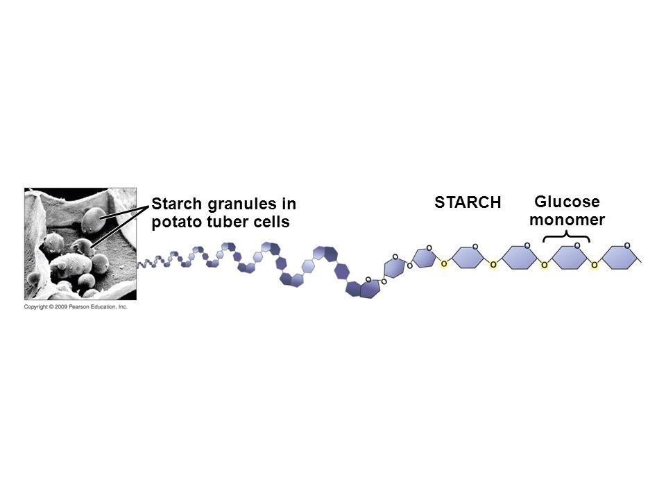 STARCH Glucose monomer