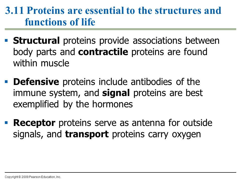 3.11 Proteins are essential to the structures and functions of life