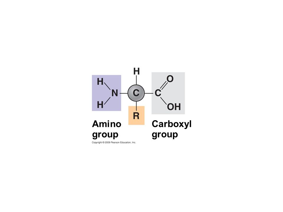 Amino group Carboxyl group