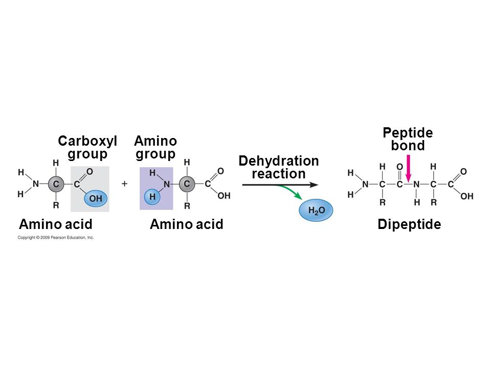 Peptide bond Carboxyl group Amino group Dehydration reaction