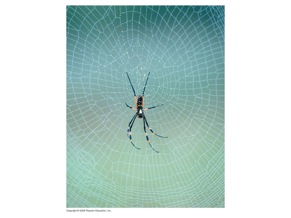 Figure 3.14UN01 Spider in web.