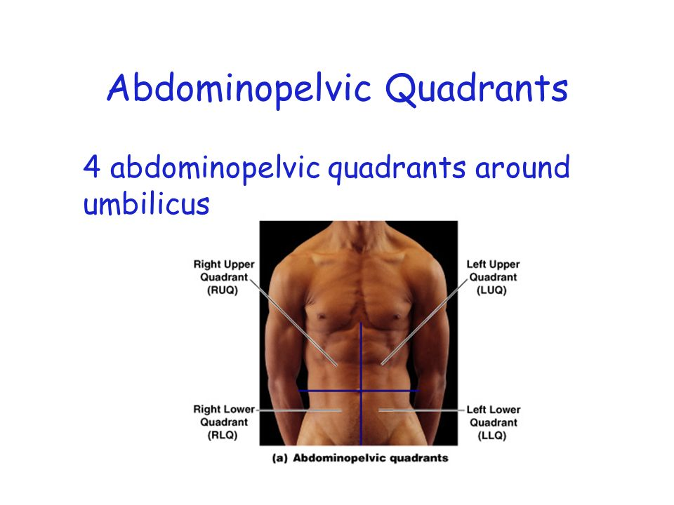 Abdominopelvic Regions Pictures to Pin on Pinterest ...  Abdominopelvic Quadrants Blank