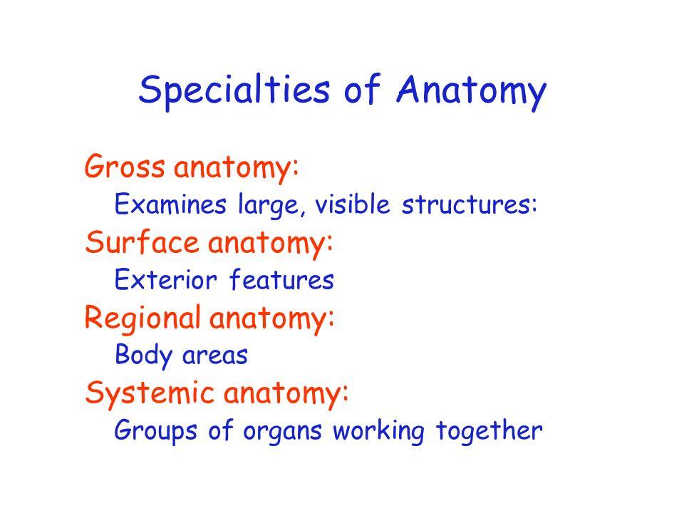 Specialties of Anatomy