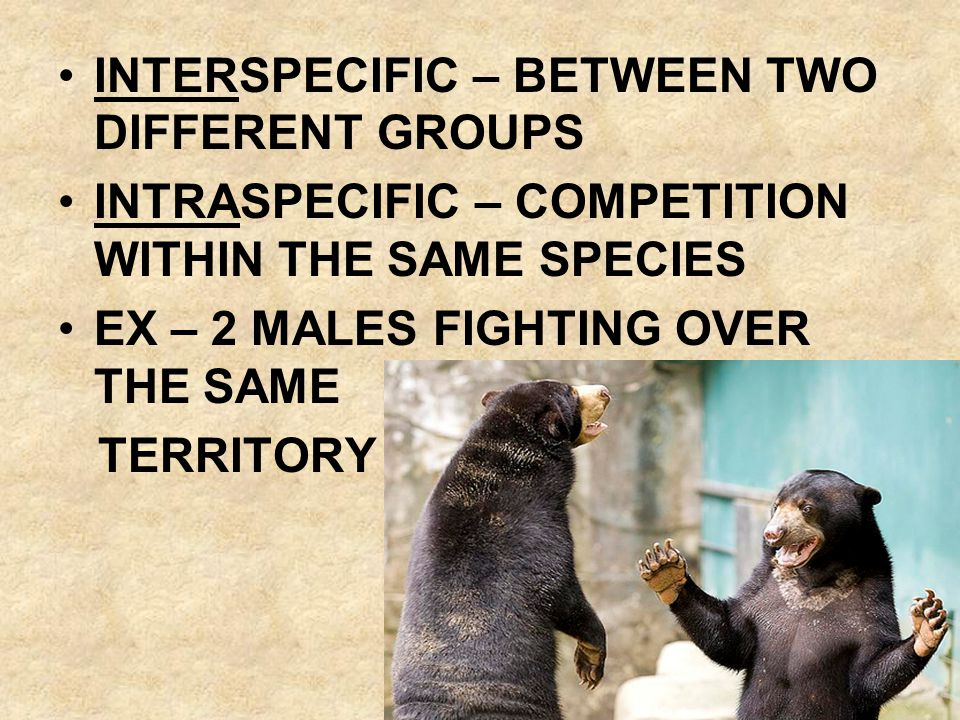 INTERSPECIFIC – BETWEEN TWO DIFFERENT GROUPS