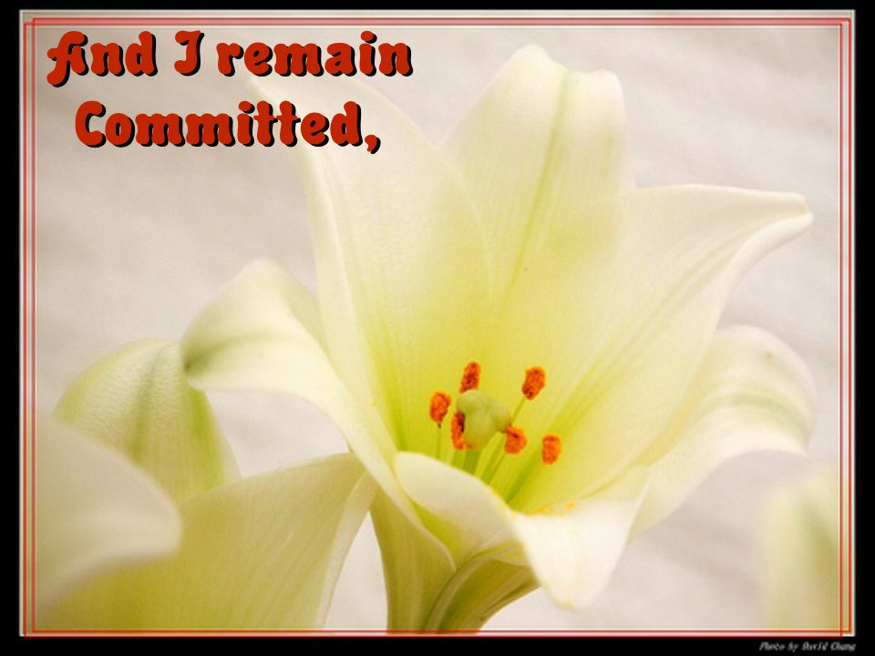 And I remain Committed,