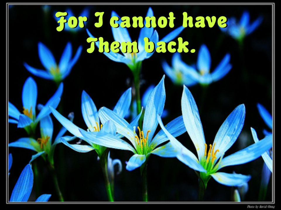 For I cannot have Them back.