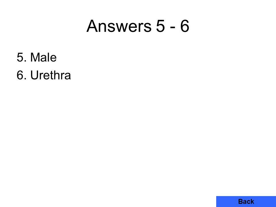 Answers 5 - 6 5. Male 6. Urethra Back