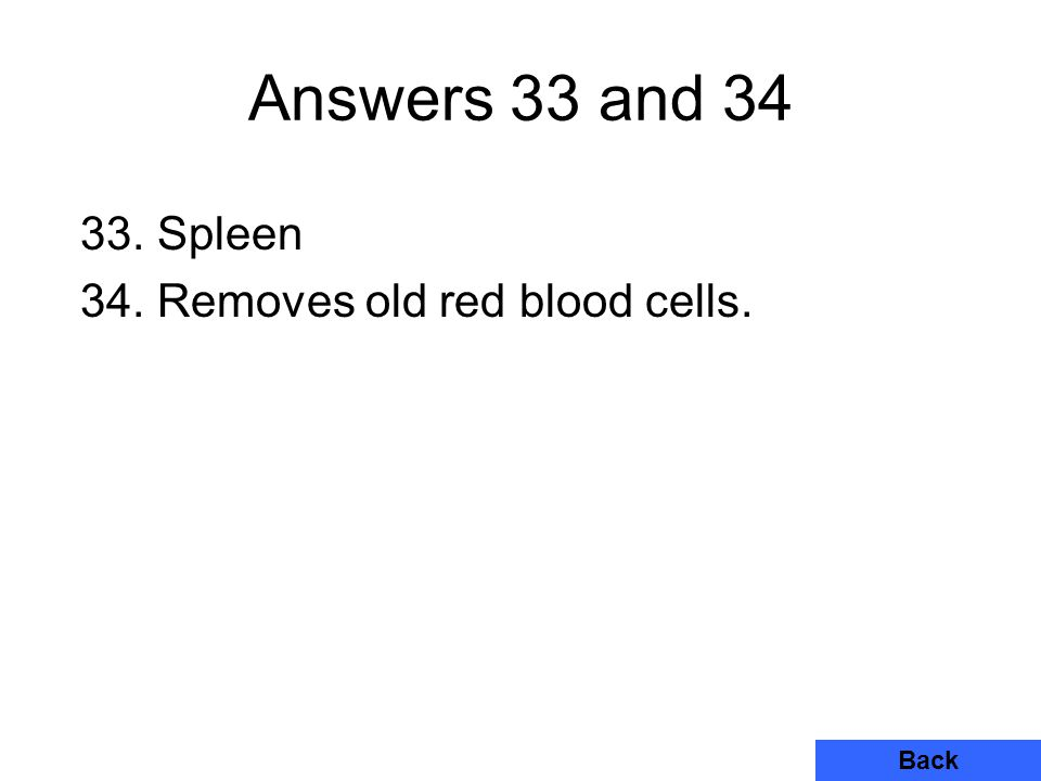 Answers 33 and 34 33. Spleen 34. Removes old red blood cells. Back