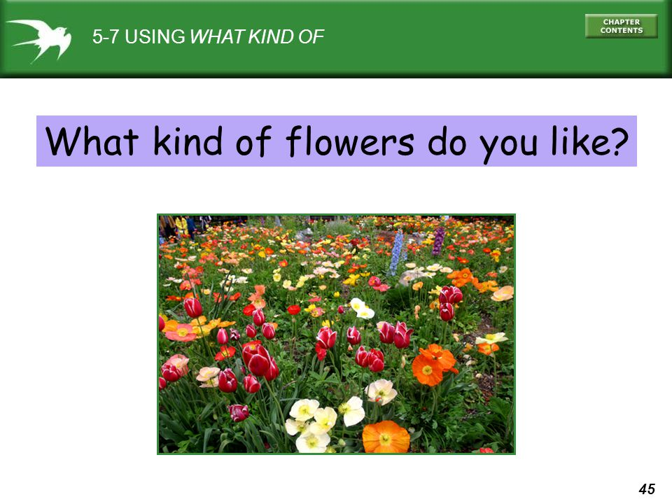 What kind of flowers do you like