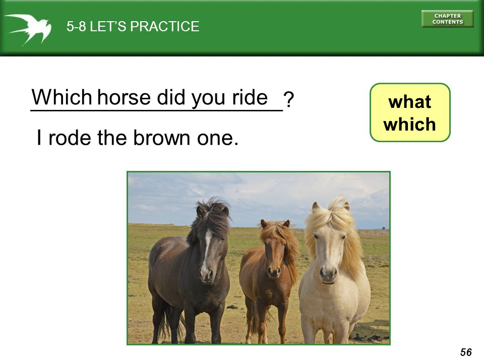 _____________________ Which horse did you ride