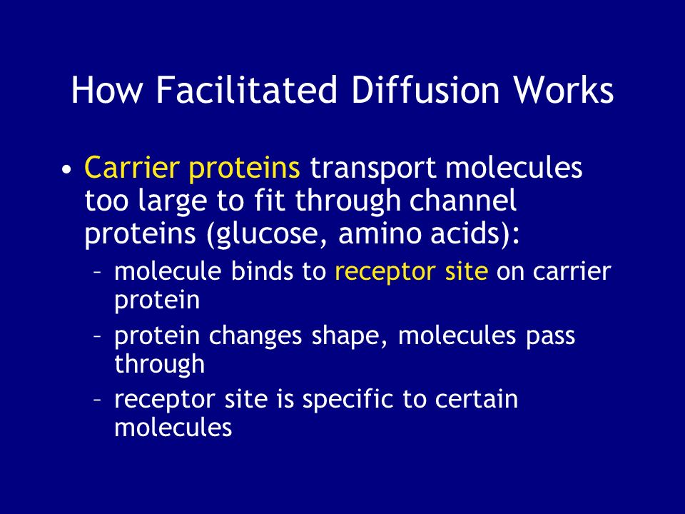 How Facilitated Diffusion Works