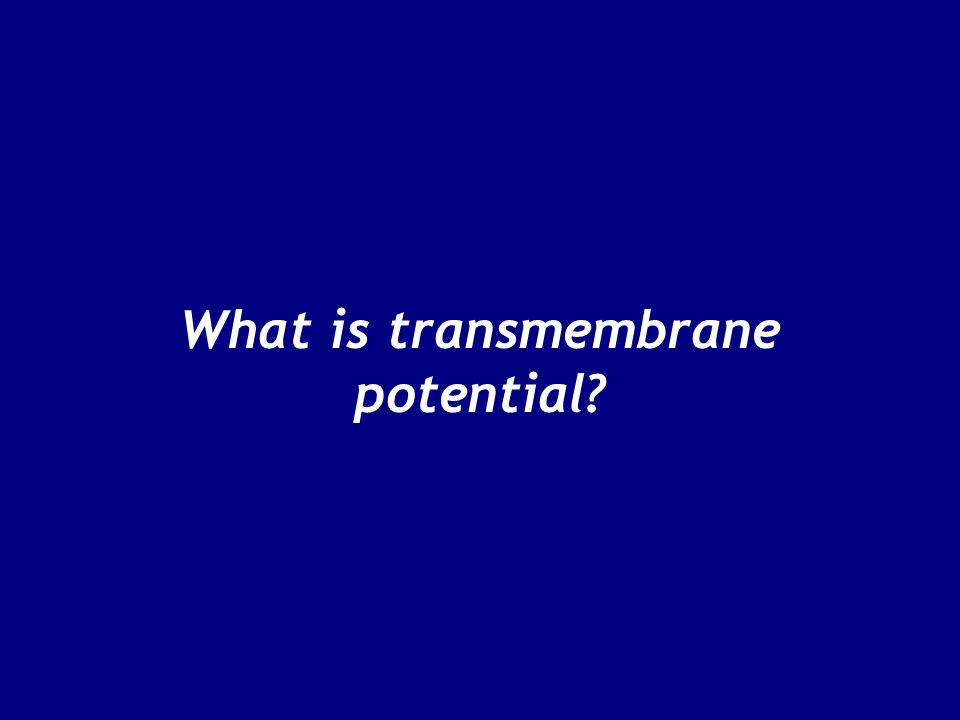 What is transmembrane potential