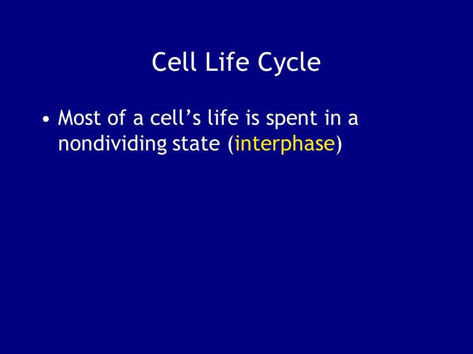Cell Life Cycle Most of a cell's life is spent in a nondividing state (interphase)