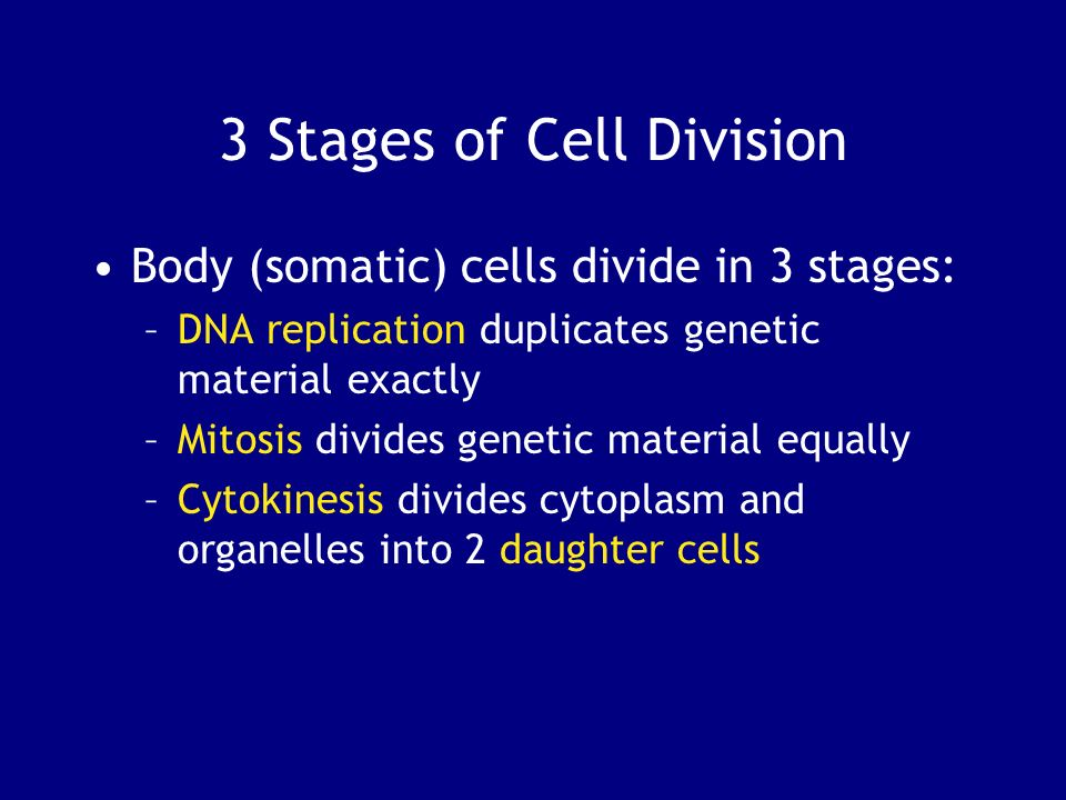 3 Stages of Cell Division