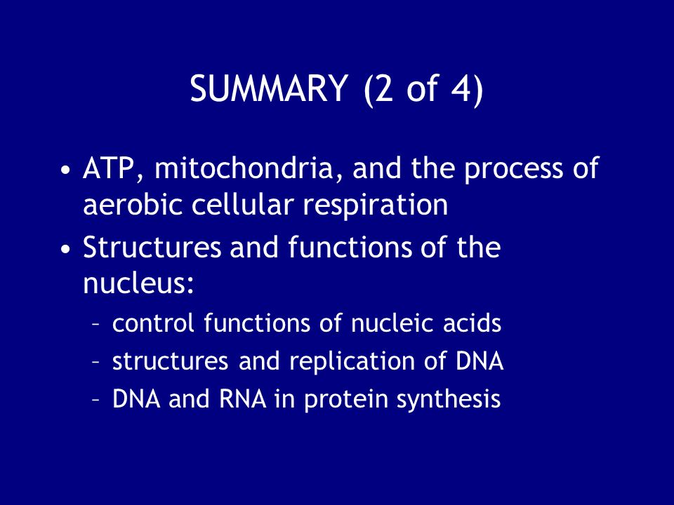 SUMMARY (2 of 4) ATP, mitochondria, and the process of aerobic cellular respiration. Structures and functions of the nucleus: