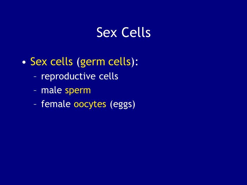 Sex Cells Sex cells (germ cells): reproductive cells male sperm