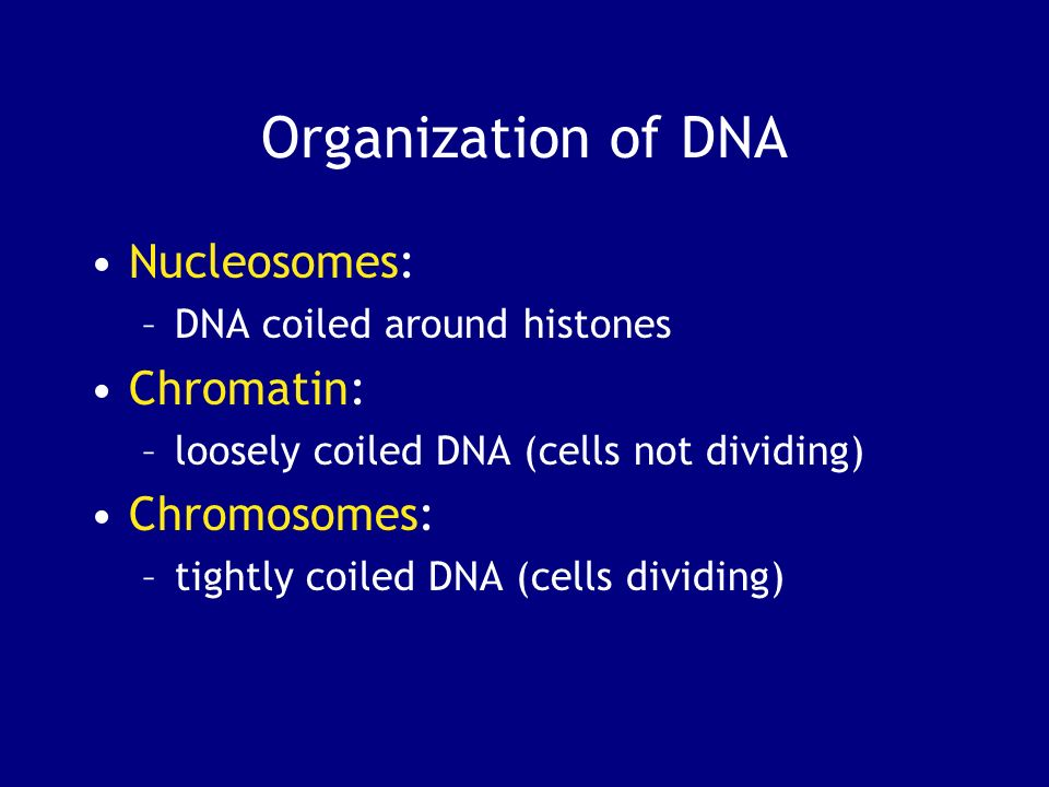 Organization of DNA Nucleosomes: Chromatin: Chromosomes: