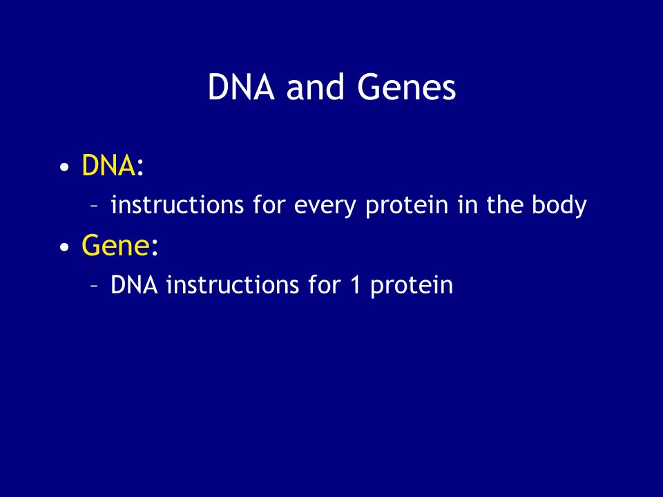 DNA and Genes DNA: Gene: instructions for every protein in the body