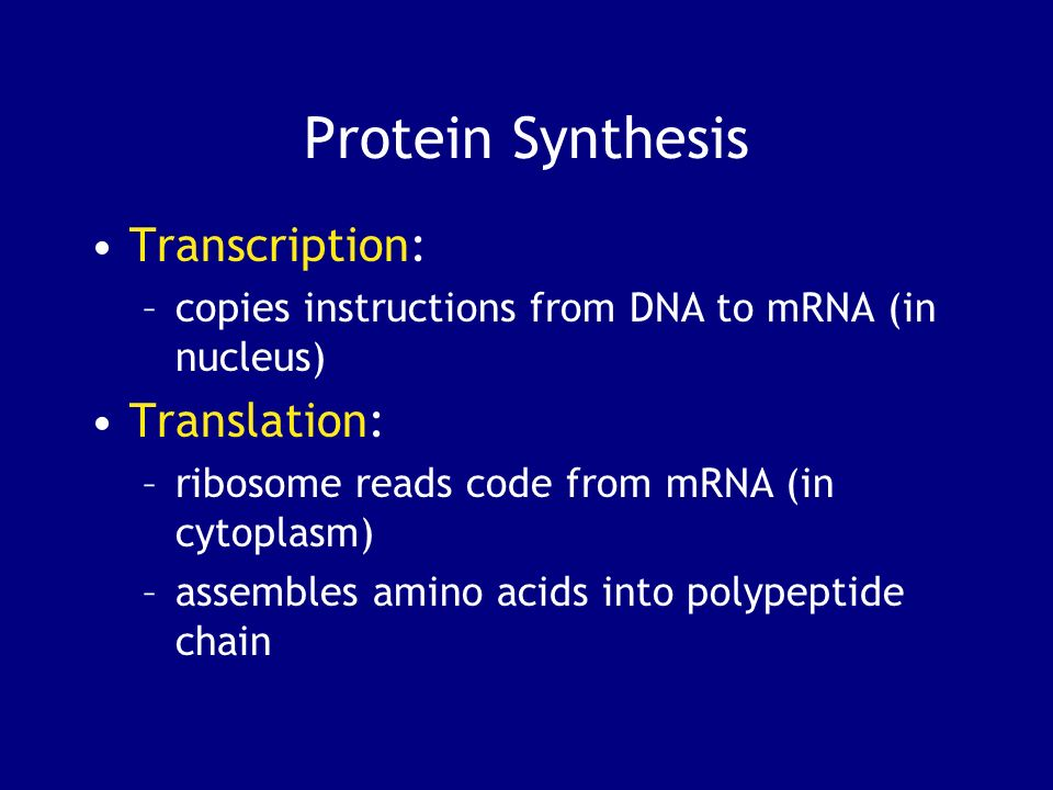 Protein Synthesis Transcription: Translation: