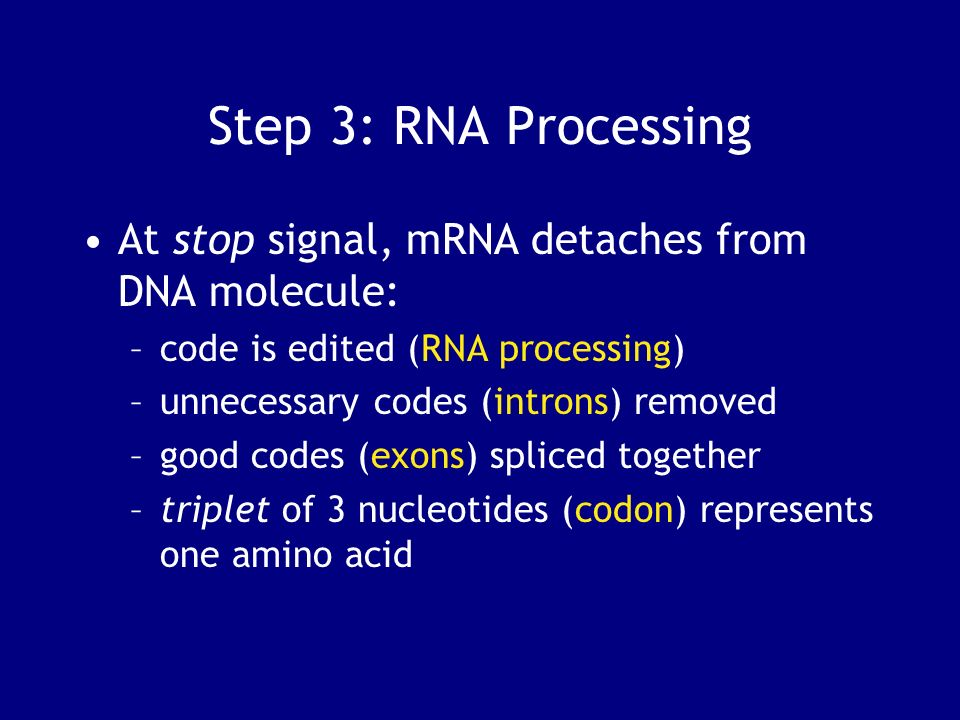 Step 3: RNA Processing At stop signal, mRNA detaches from DNA molecule: code is edited (RNA processing)