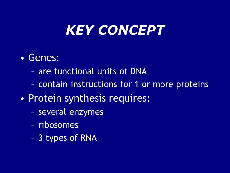 KEY CONCEPT Genes: Protein synthesis requires: