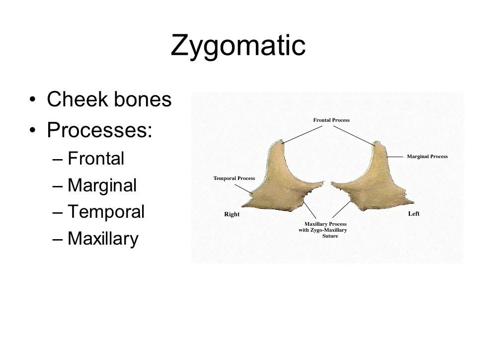 Zygomatic Cheek bones Processes: Frontal Marginal Temporal Maxillary