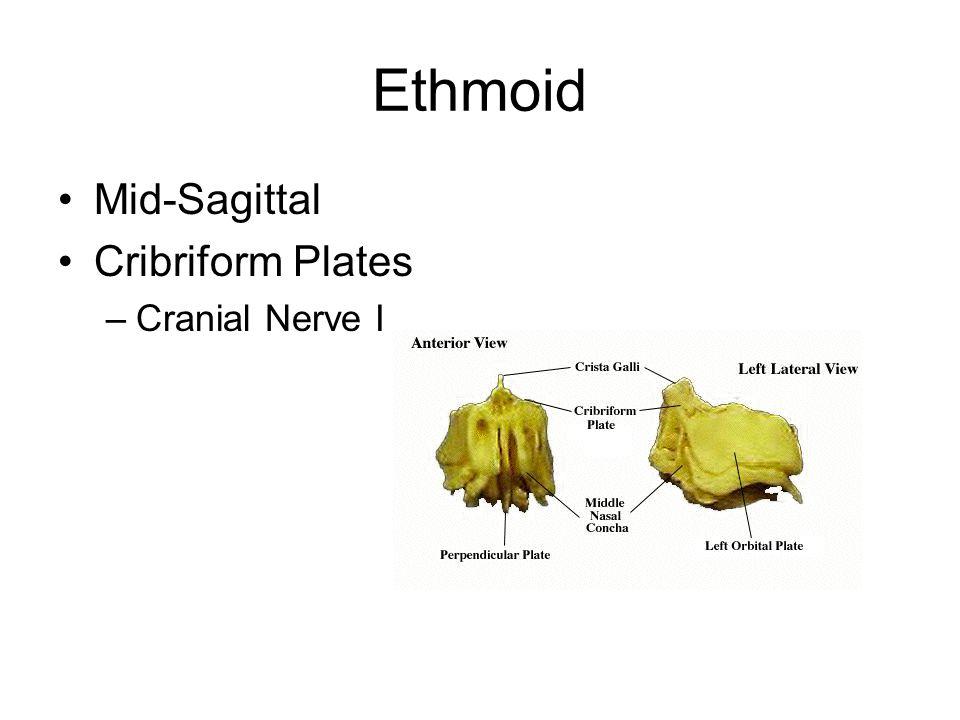 Ethmoid Mid-Sagittal Cribriform Plates Cranial Nerve I