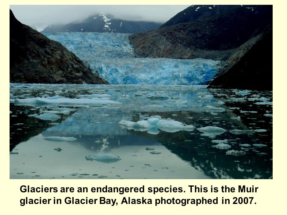 Glaciers are an endangered species