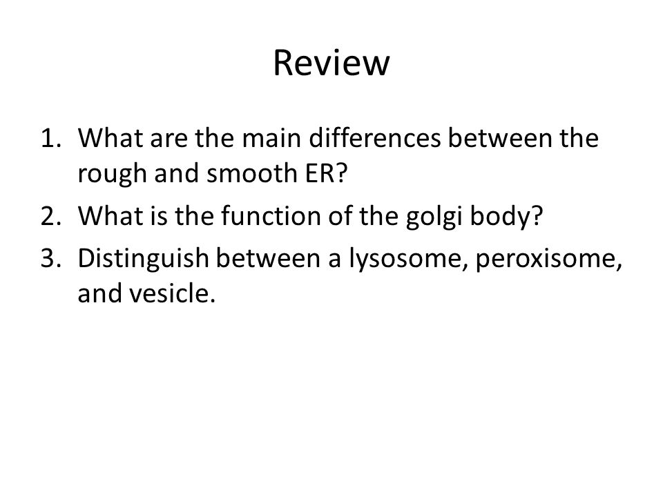 Review What are the main differences between the rough and smooth ER