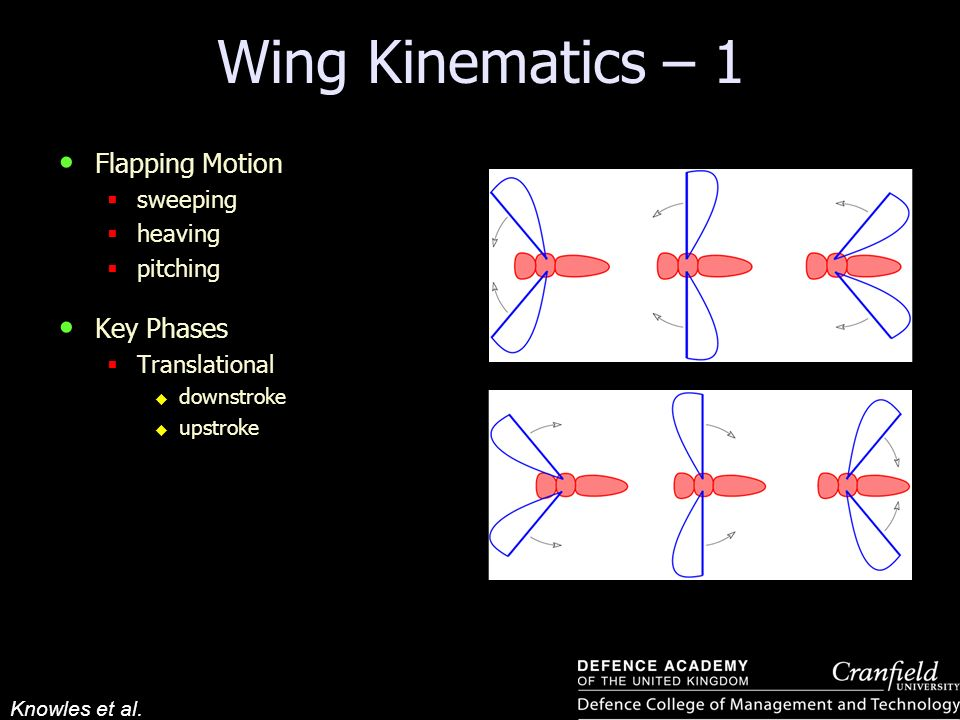 Wing Kinematics – 1 Flapping Motion Key Phases sweeping heaving