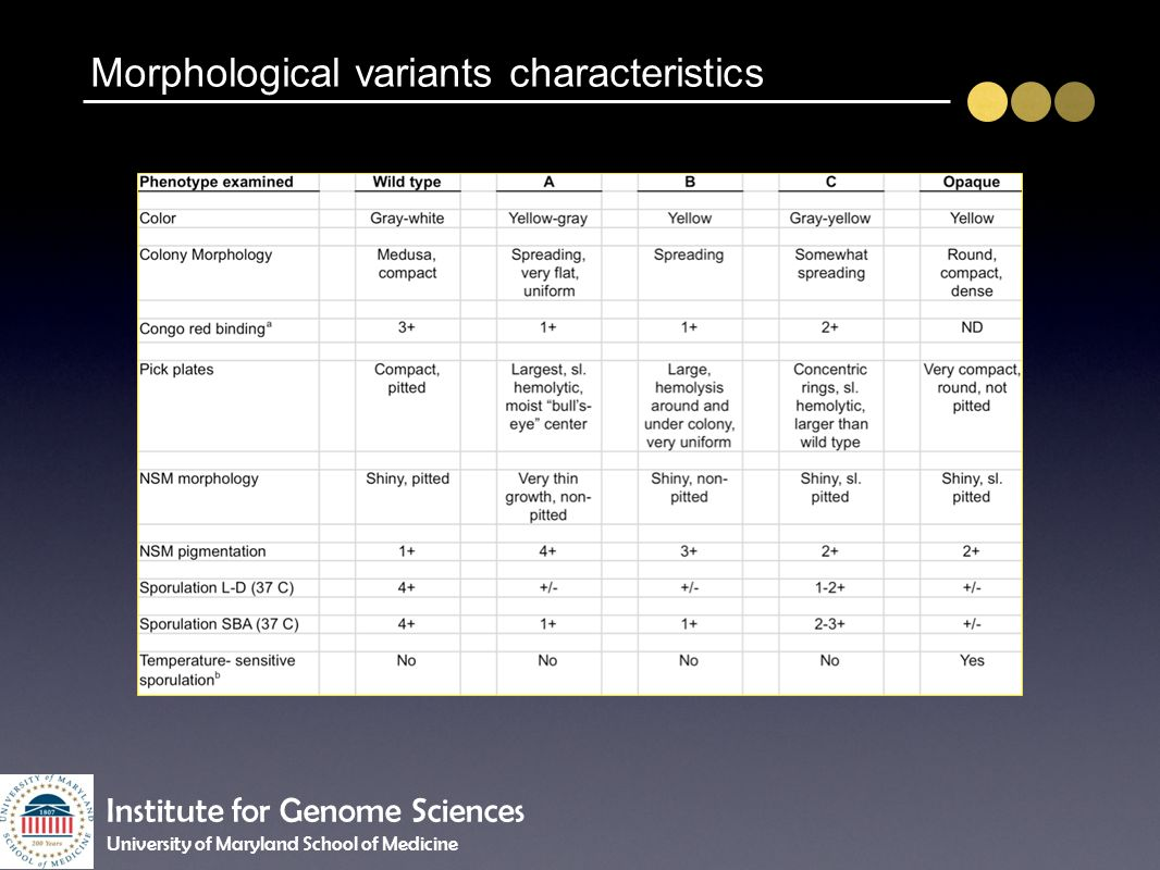 Morphological variants characteristics