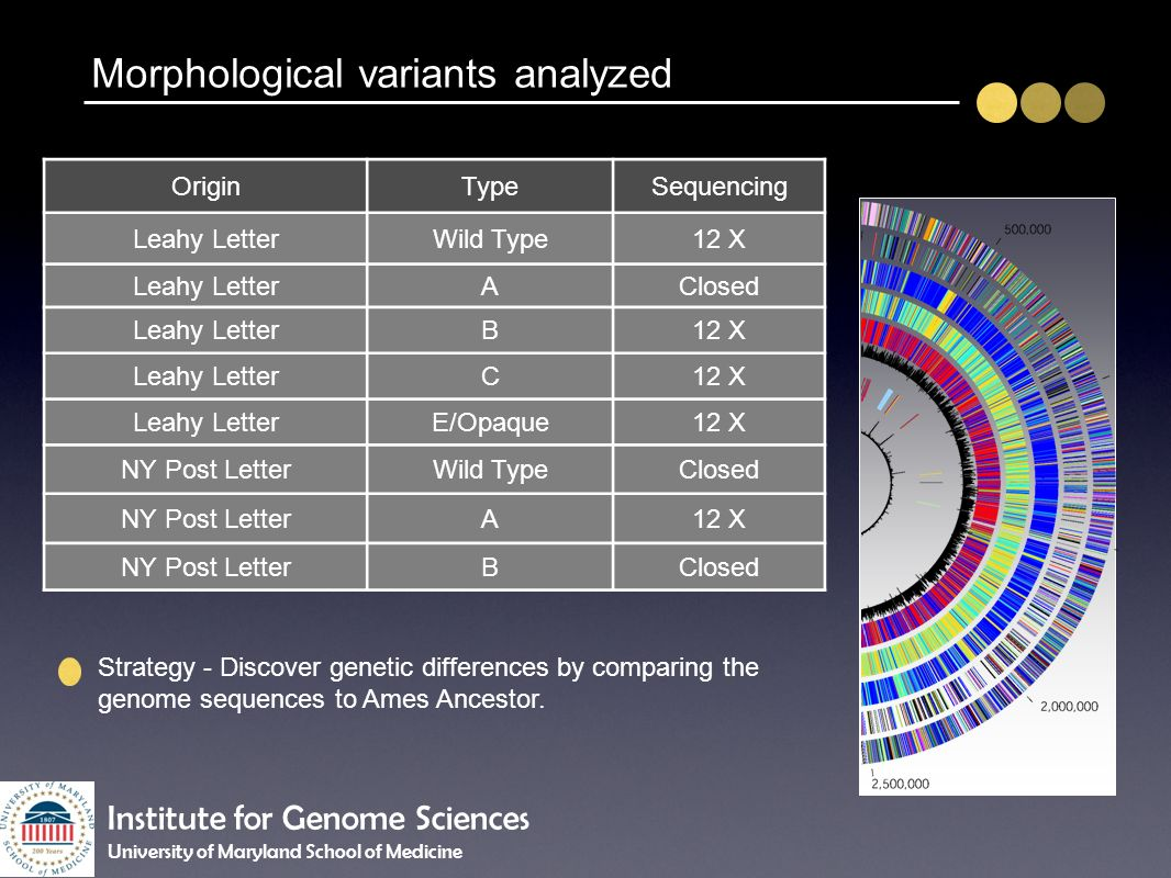 Morphological variants analyzed