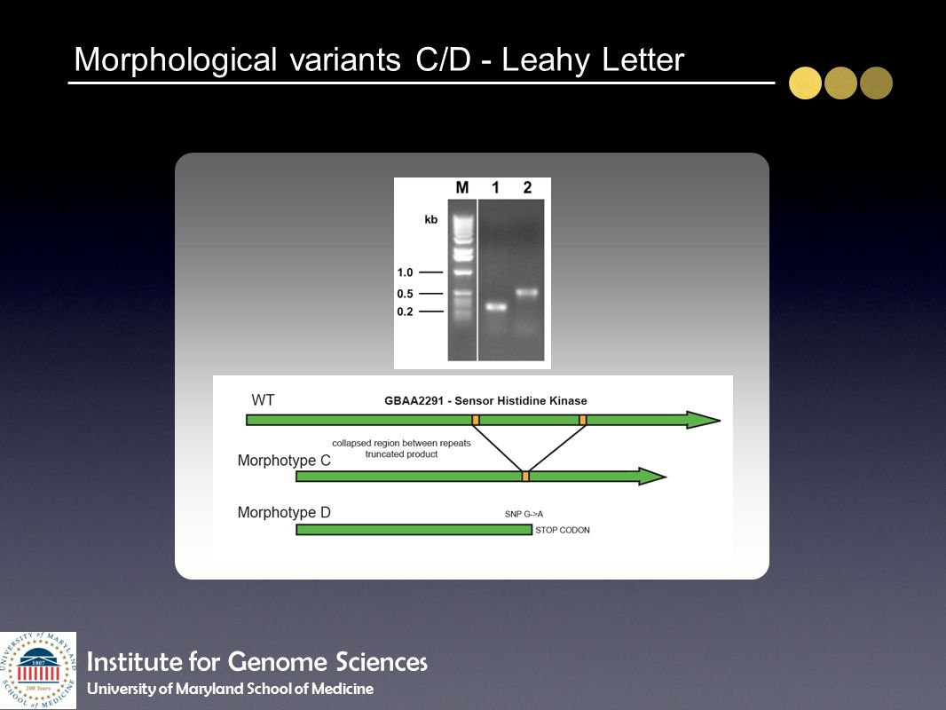 Morphological variants C/D - Leahy Letter