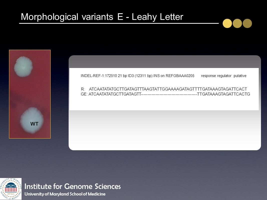 Morphological variants E - Leahy Letter