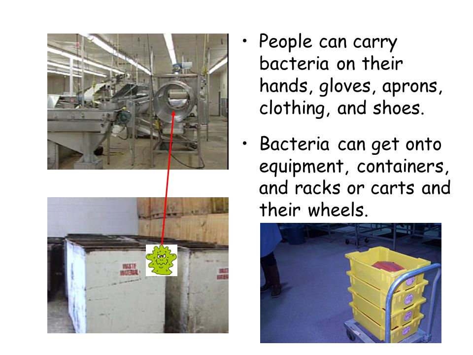 People can carry bacteria on their hands, gloves, aprons, clothing, and shoes.