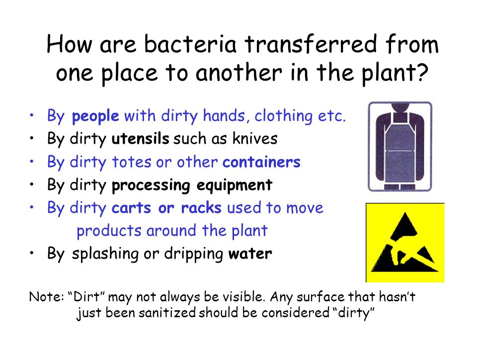How are bacteria transferred from one place to another in the plant