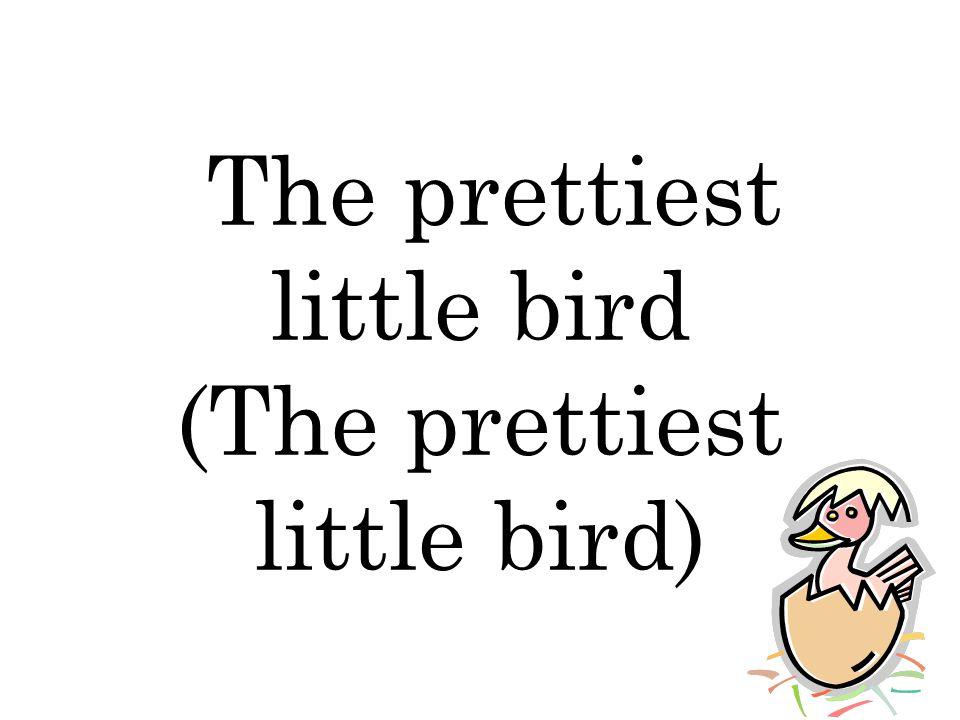 The prettiest little bird (The prettiest little bird)