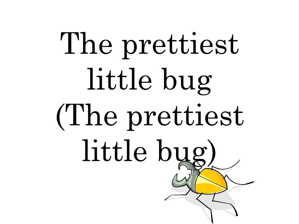 The prettiest little bug (The prettiest little bug)