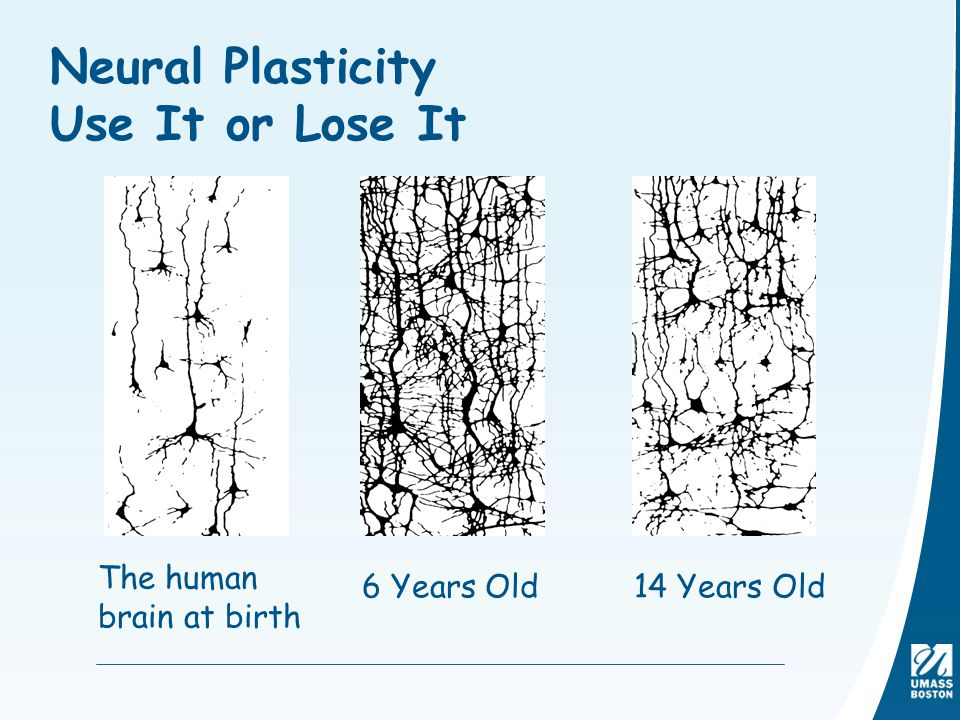 Neural Plasticity Use It or Lose It